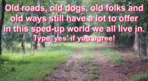 Old Roads, Old Dogs, Old Folks and Old Ways